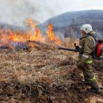 С 12 апреля в лесах Орловской области начался пожароопасный сезон
