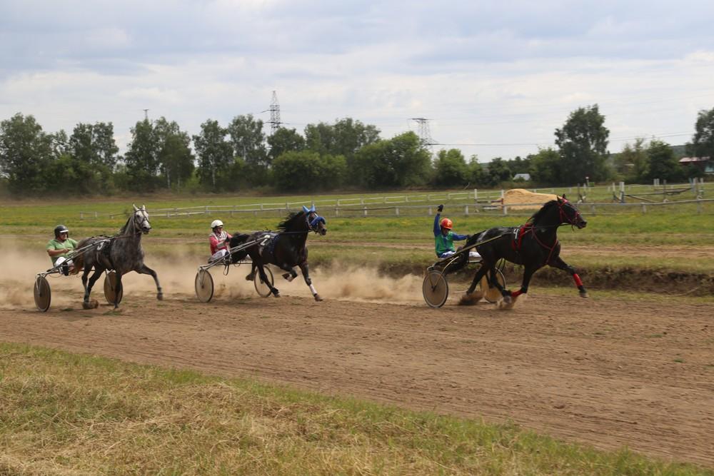 В Орле состоялся I этап Кубка России по ЦФО для лошадей рысистых пород