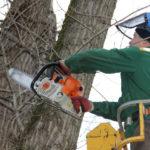 Работники МУКП «Ливенское» опиливают деревья