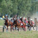 В Орле пройдут лошадиные бега