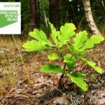 Ливенское лесничество примет участие во Всероссийской акции «Сохраним лес»